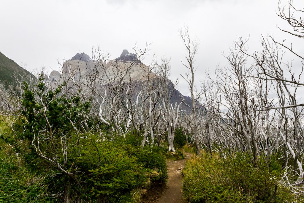 Torres del Paine Feuer abgebrannt Bäume